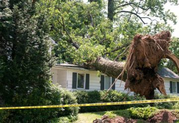 Storm & Wind Damage